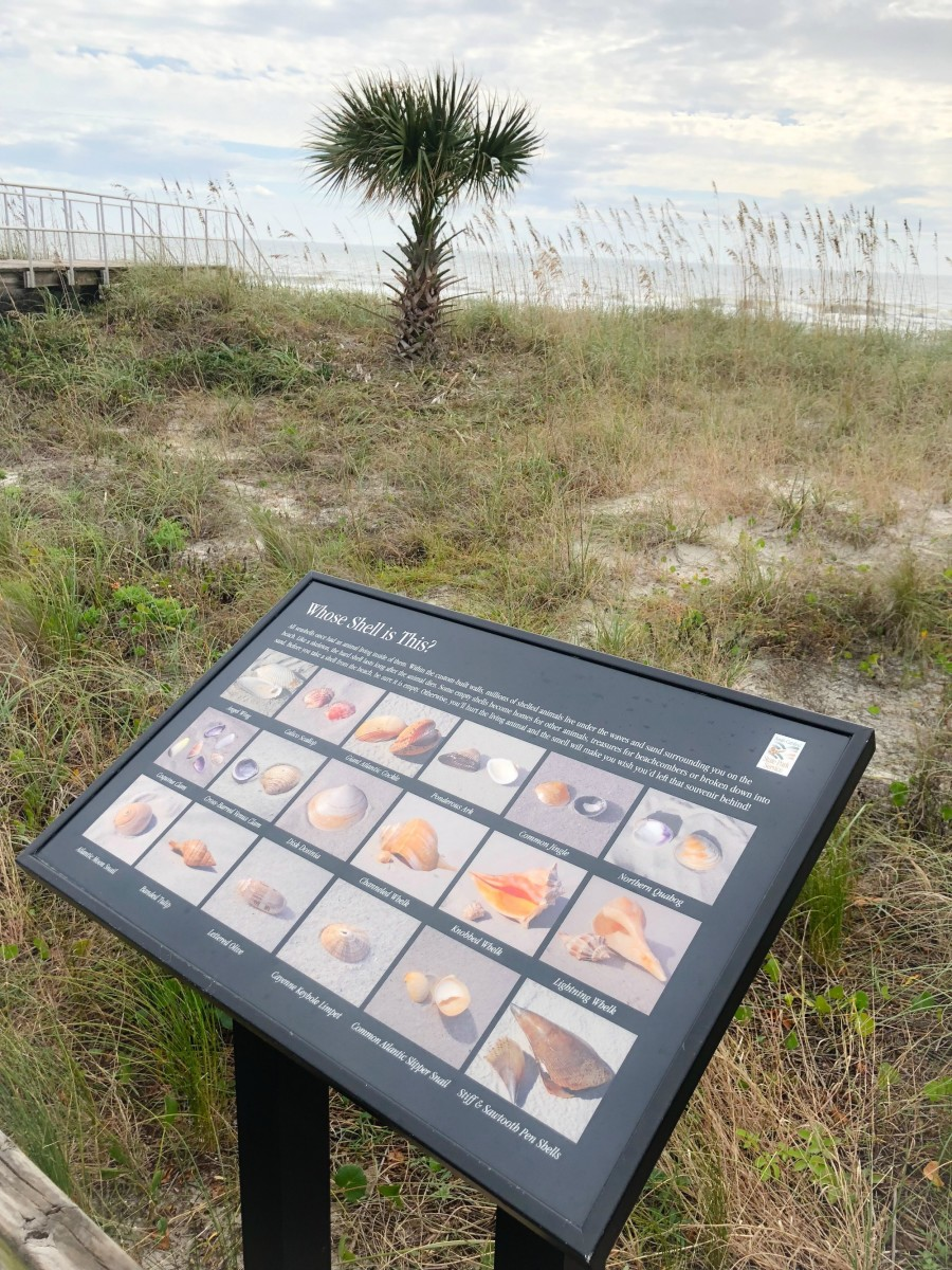sign about learning about shells on the beach