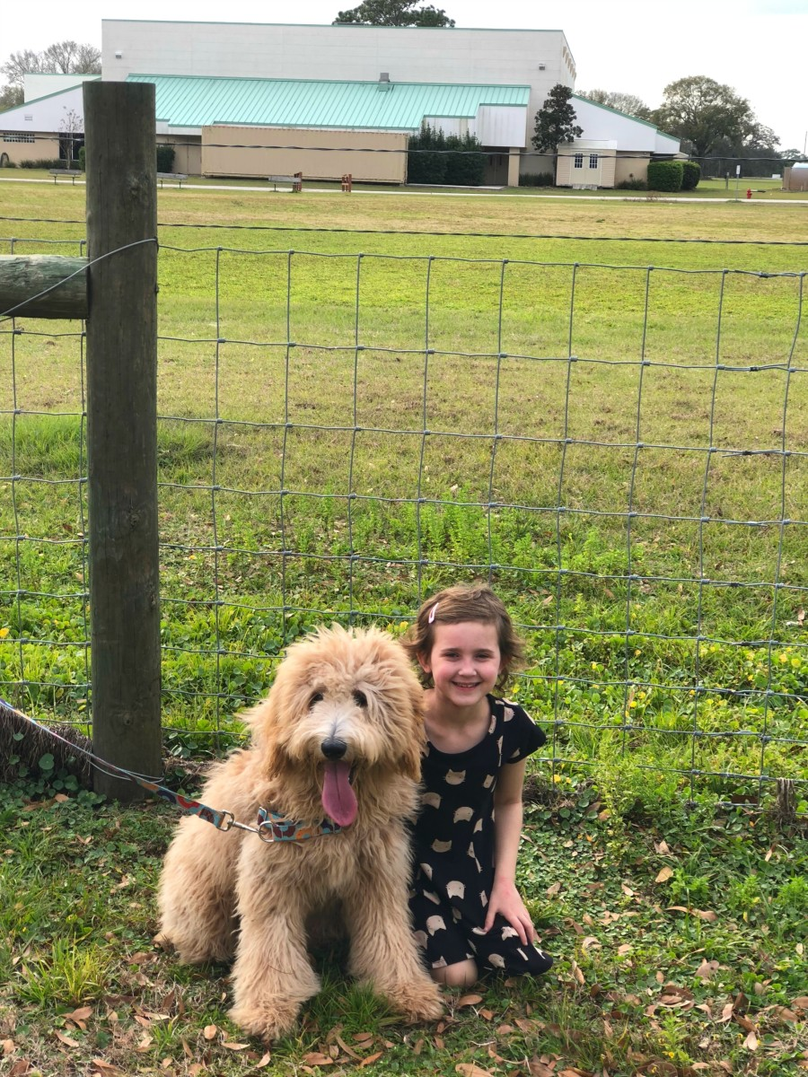 goldendoodle and little girl on farm