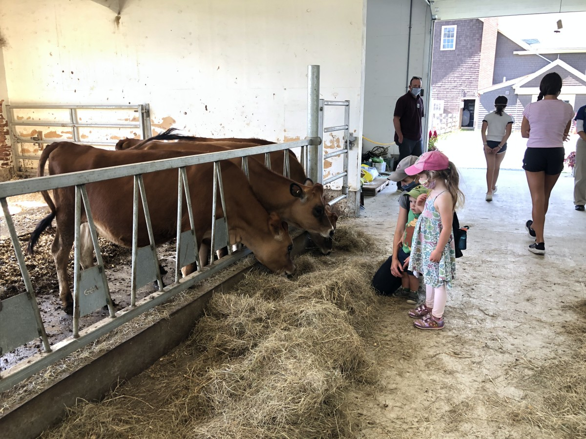 Family Fun at Billings Farm in Vermont