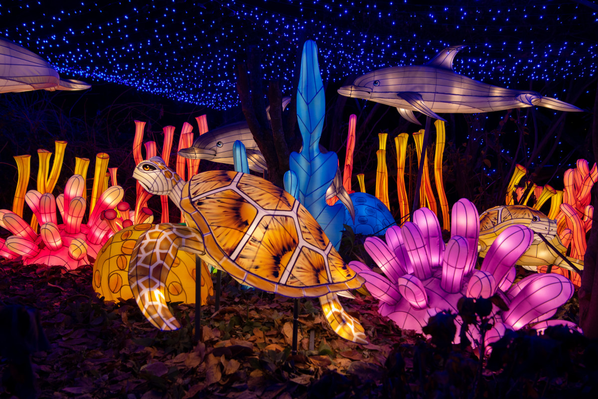 Holiday Lights at the Bronx Zoo in NYC