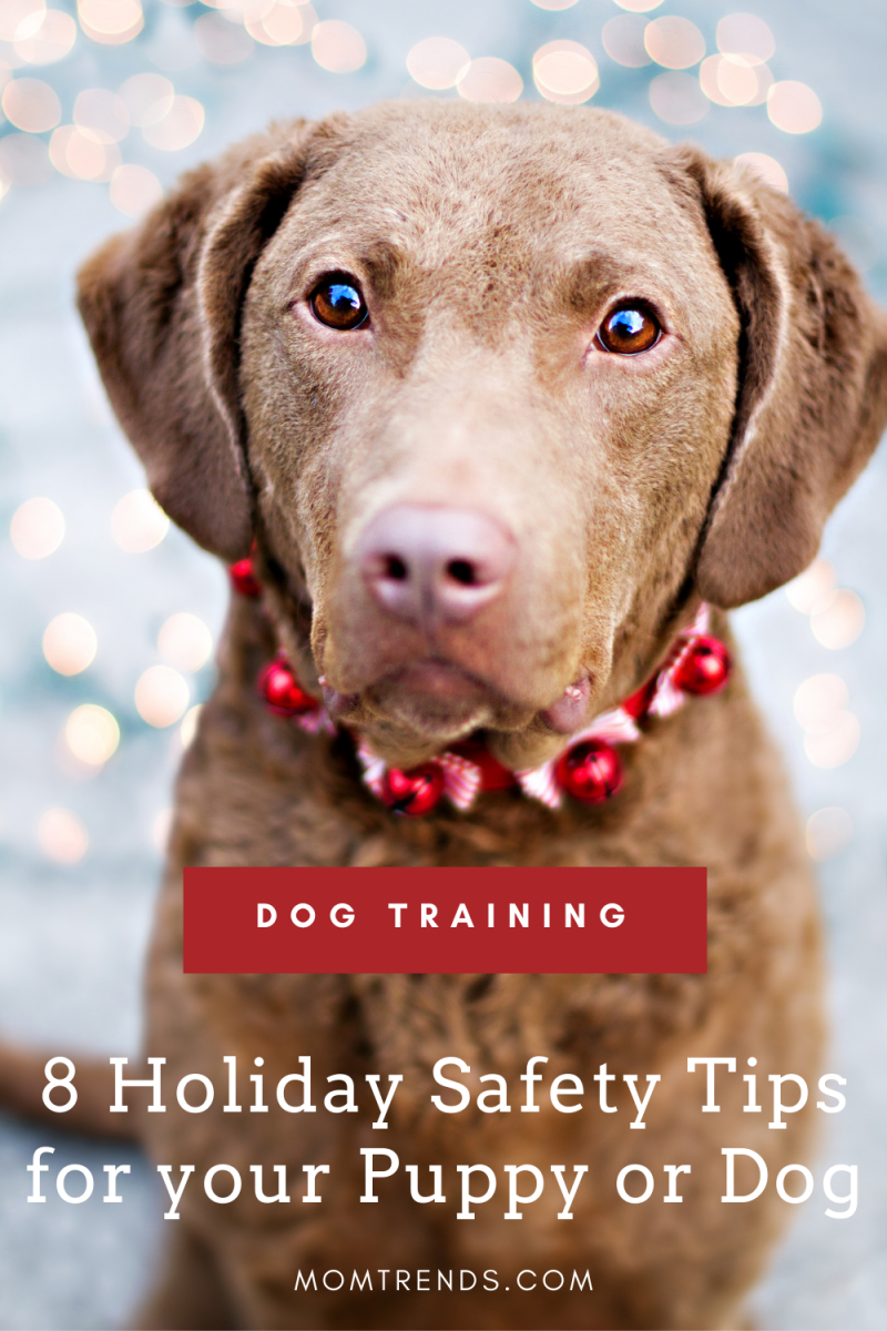 DOG TRAINING for the holidays