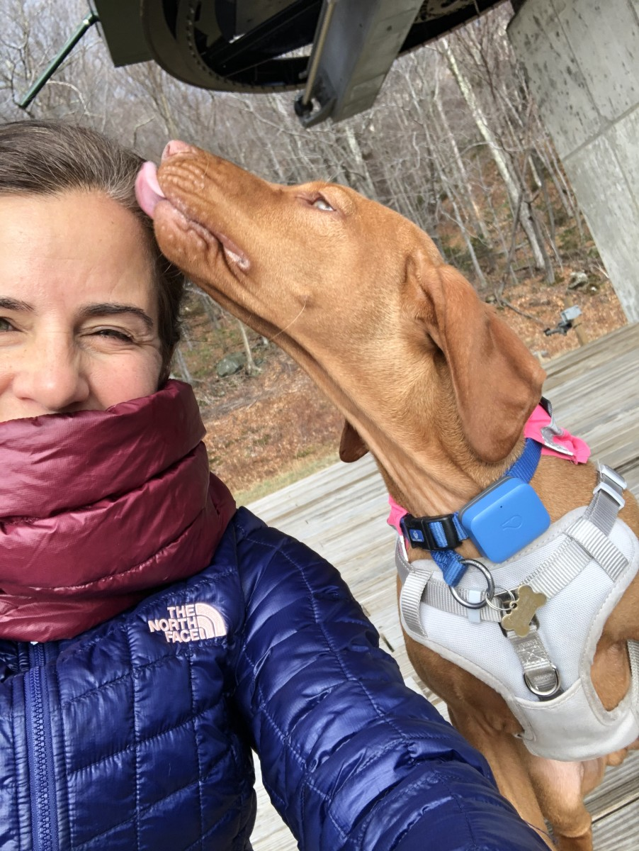 GPS and Wellness Tracker for Dogs