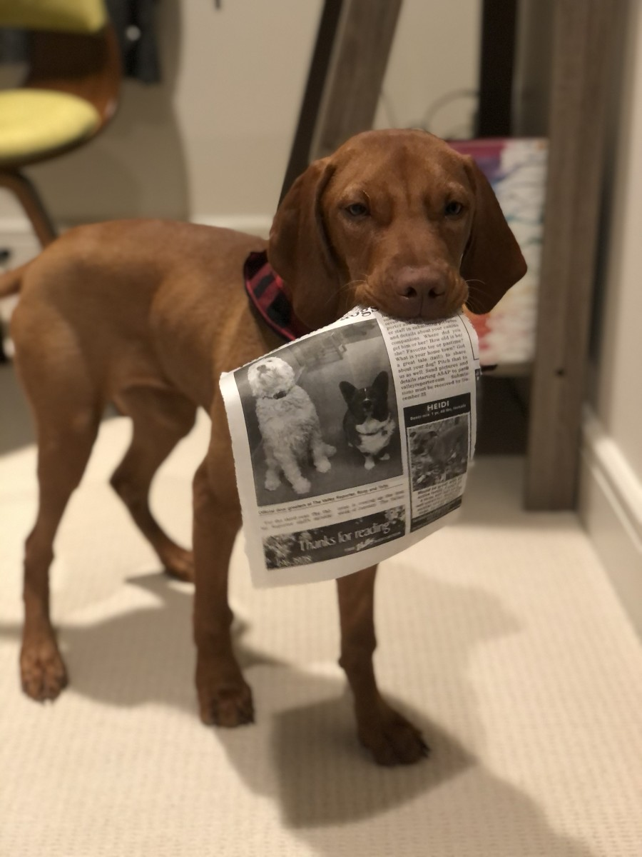 Money Smart Guide to Pet Insurance