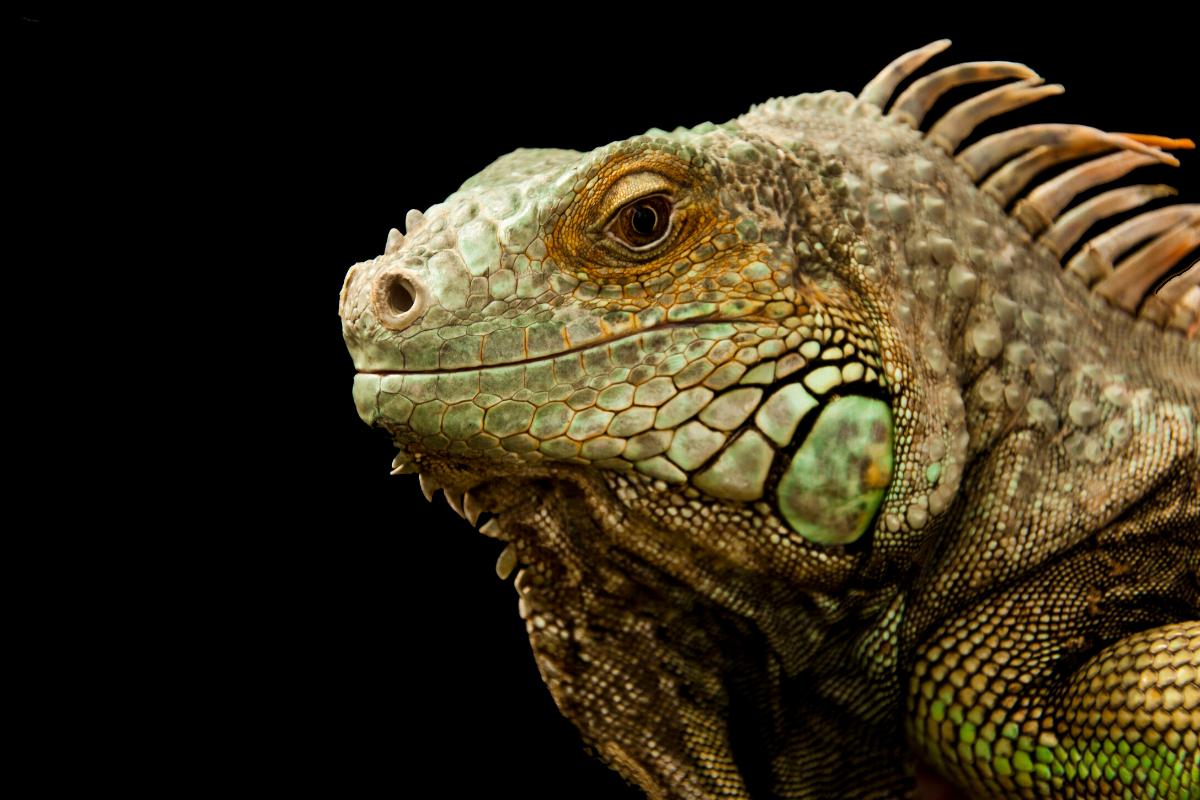 Chemical peel lizard skin