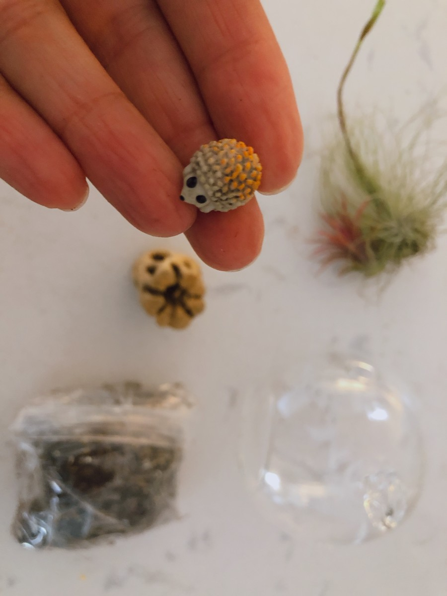 Make An Air Plant Terrarium