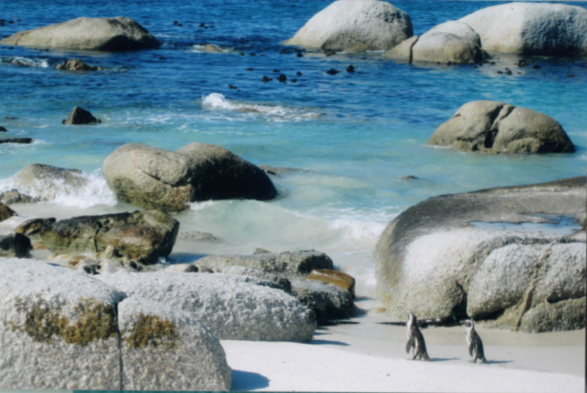 Penguin Beach South Africa