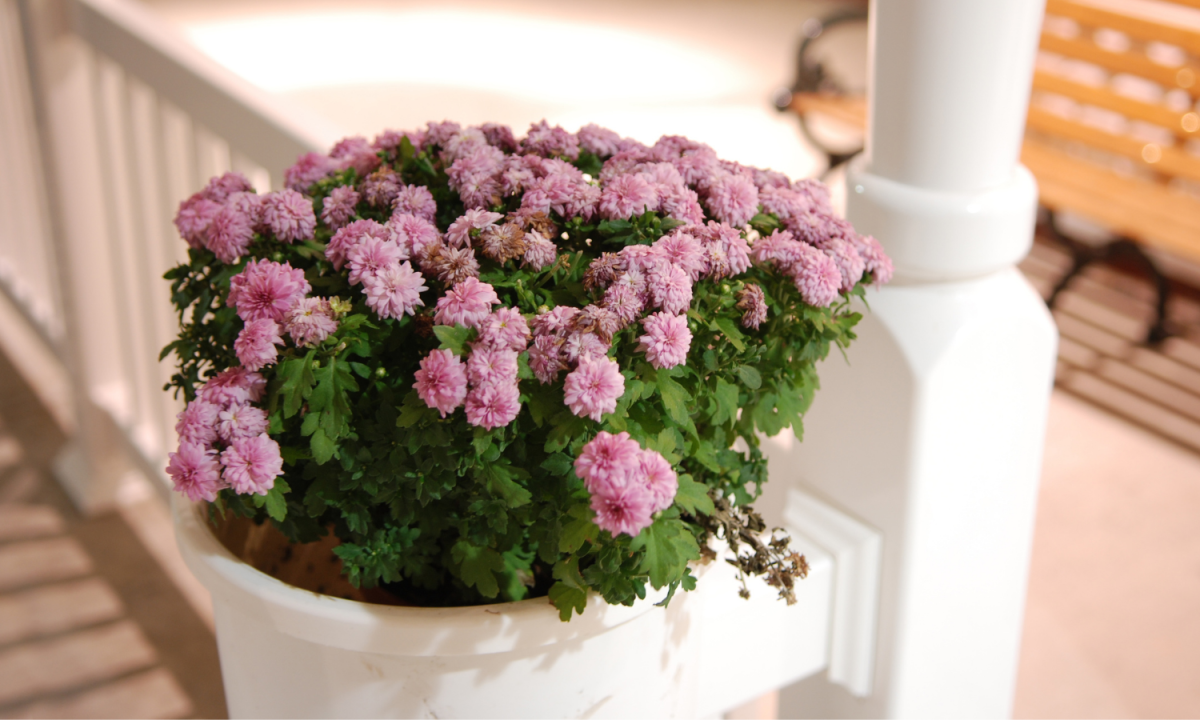 sale flowers for a front porch