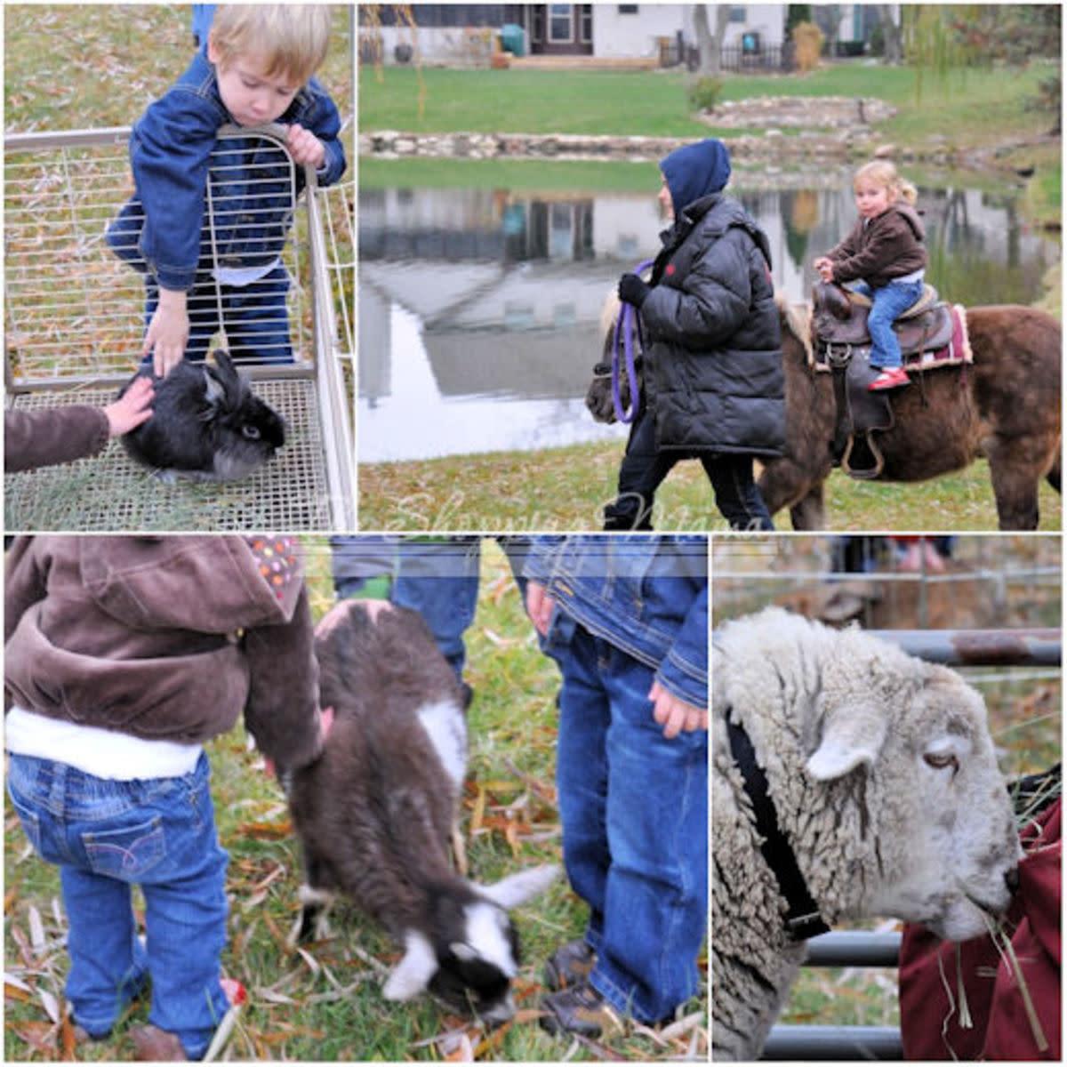 pony-rides-at-farm-party