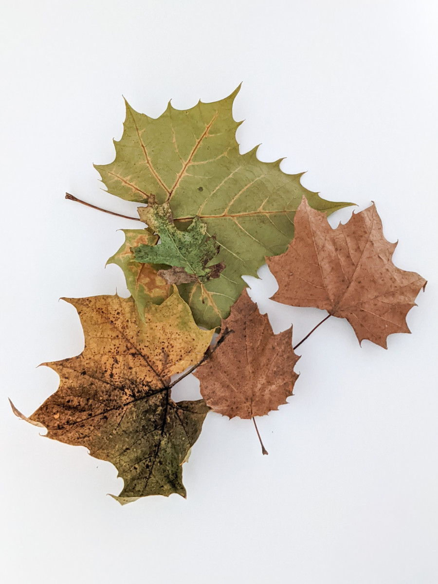 Easy Fall Leaf Paint Project Craft for Kids